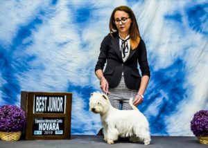 """Alt:""""West-highland-white-terrier"""""""